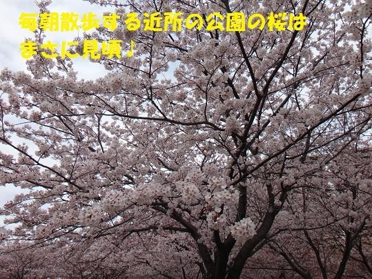 f0121712_15010916.jpg