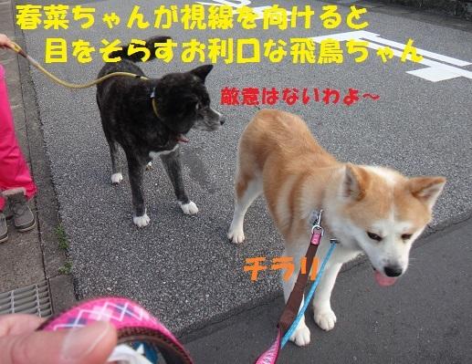 f0121712_15013178.jpg