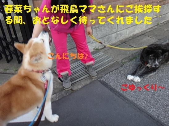 f0121712_15014696.jpg