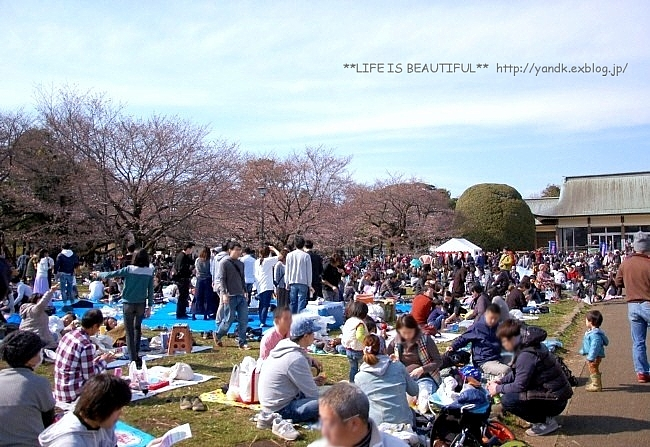 春の宴*2017_d0083623_22454742.jpg