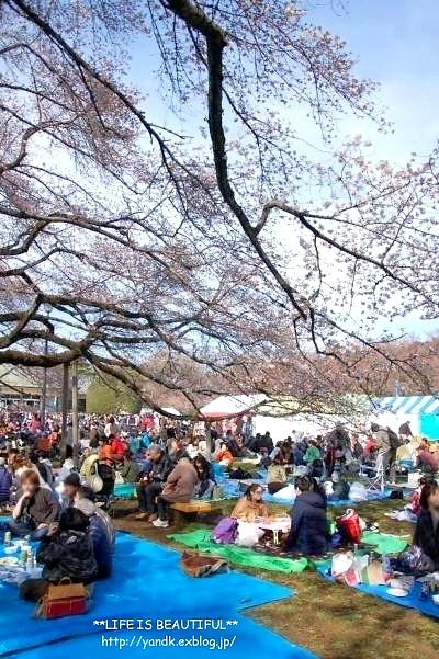 春の宴*2017_d0083623_22483184.jpg