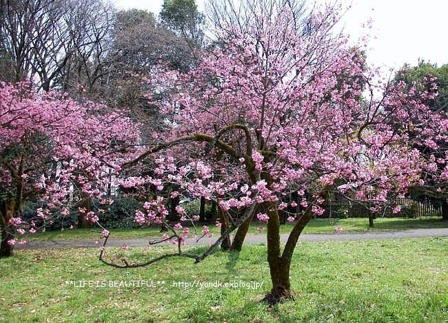 春の宴*2017_d0083623_2252063.jpg