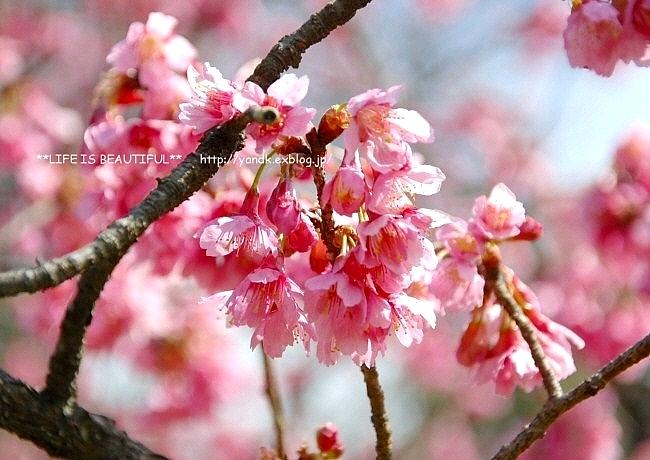春の宴*2017_d0083623_22552461.jpg
