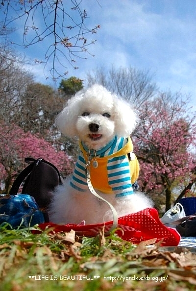春の宴*2017_d0083623_2332434.jpg