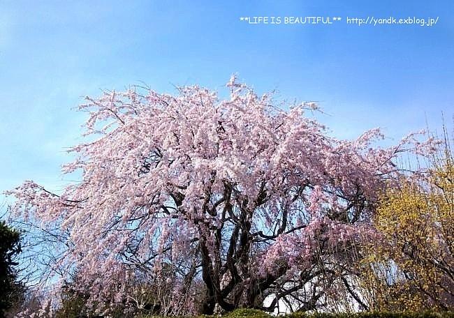 春の宴*2017_d0083623_2385944.jpg