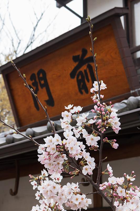 調布・深大寺の桜(ちょっと)_a0003650_22424527.jpg