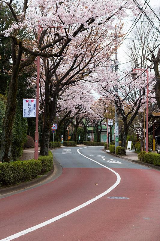 調布・深大寺の桜(ちょっと)_a0003650_2249011.jpg