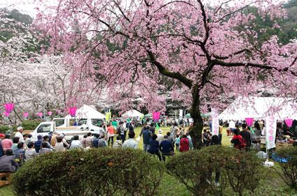 今年のさくら祭りは見事な満開でした_b0145257_13353916.jpg