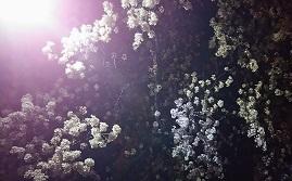 桜を見に_f0130259_14501111.jpg
