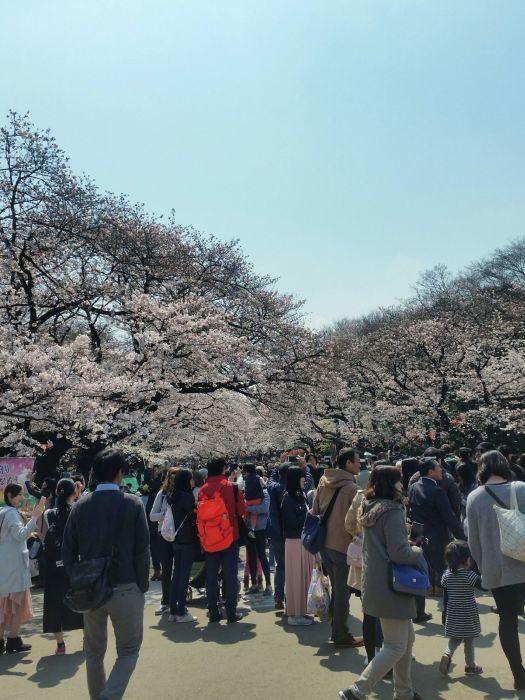 桜コレクション_a0272765_17431785.jpg