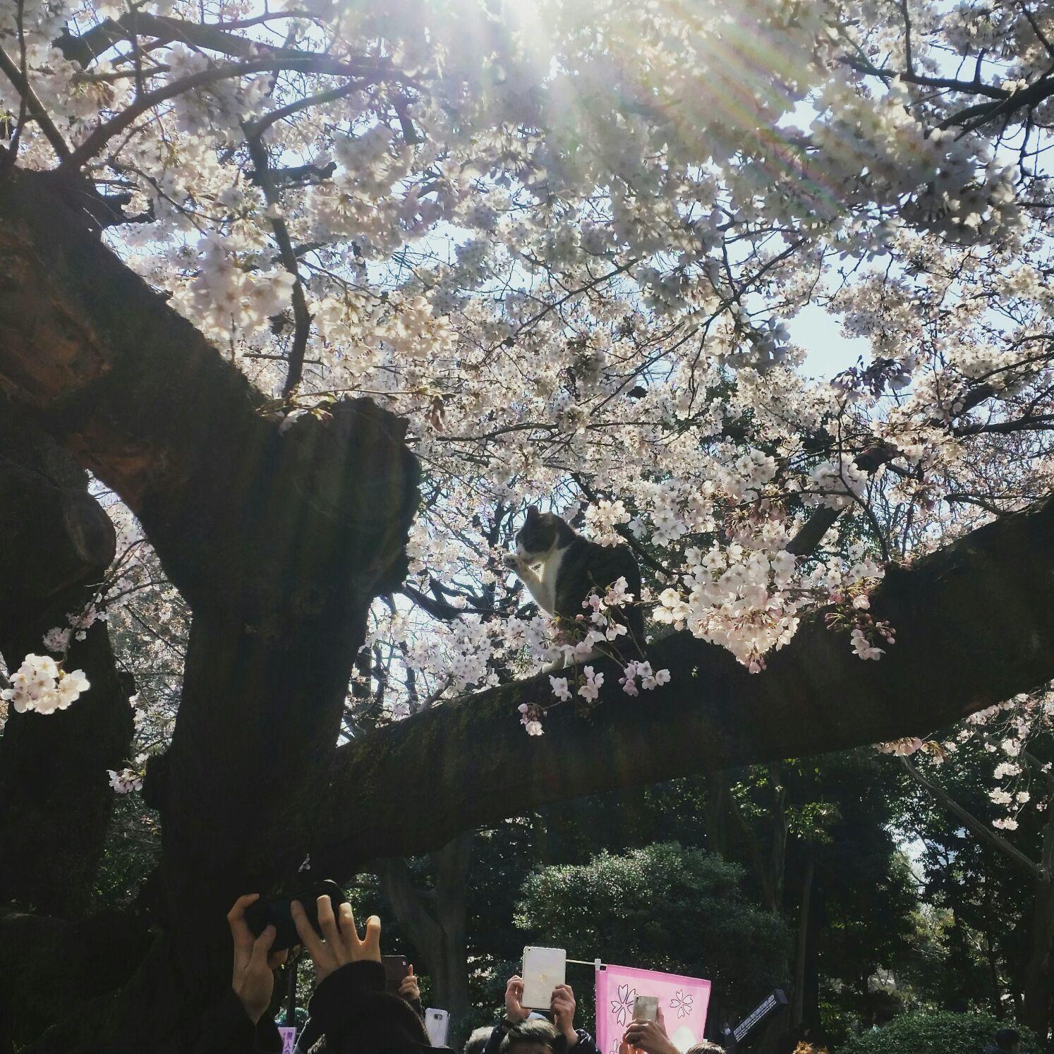 桜コレクション_a0272765_17433554.jpg