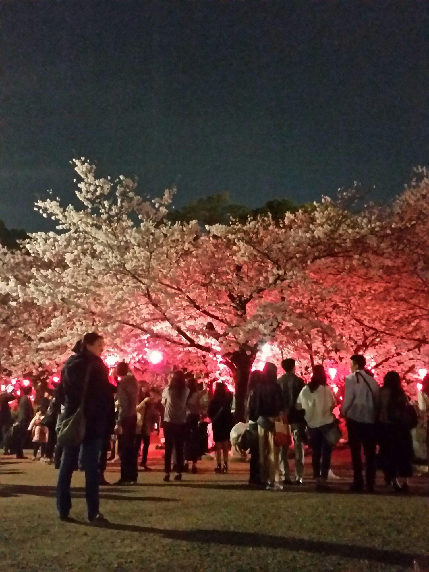 桜コレクション_a0272765_17435096.jpg
