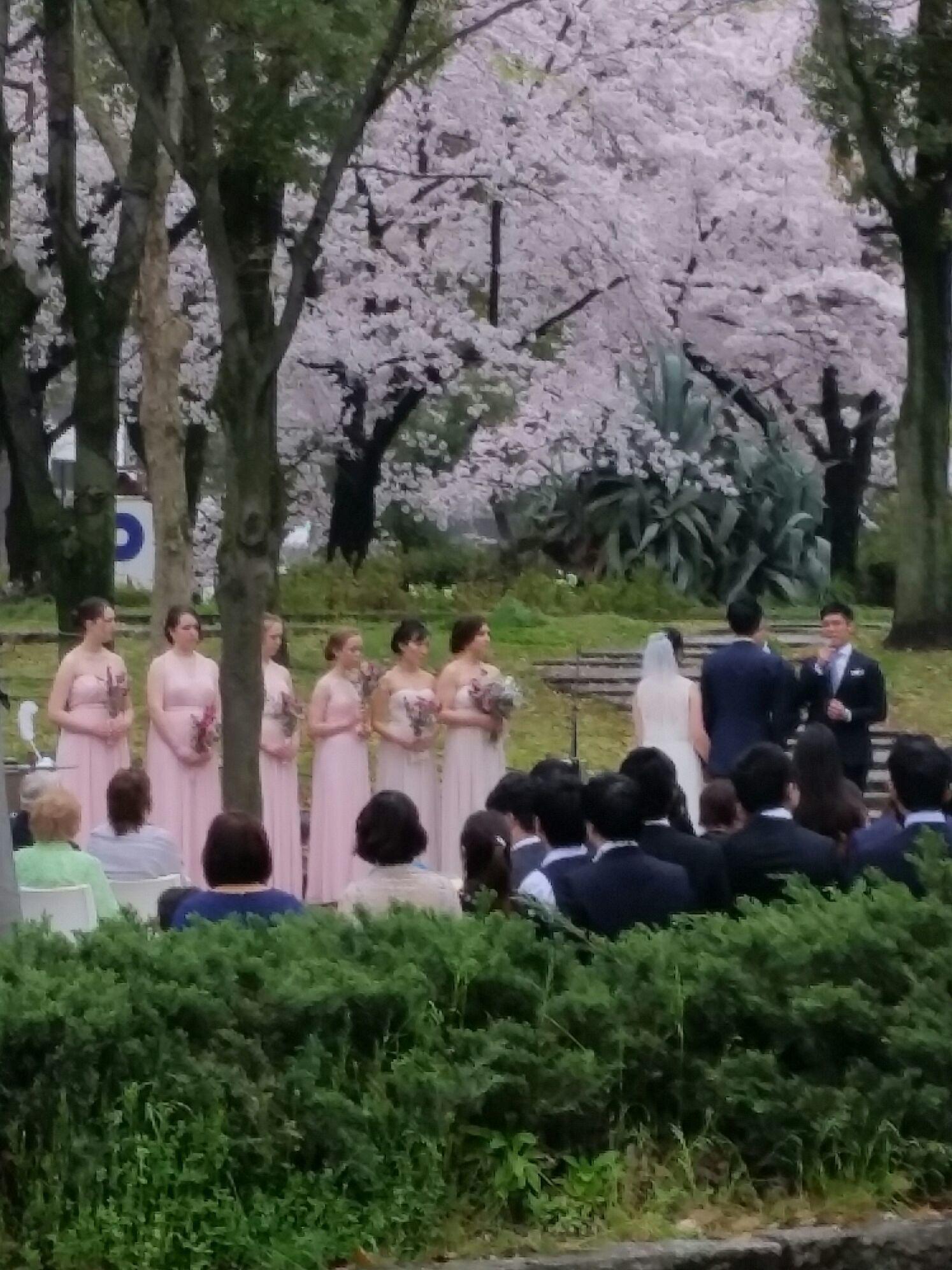 桜コレクション_a0272765_17440333.jpg