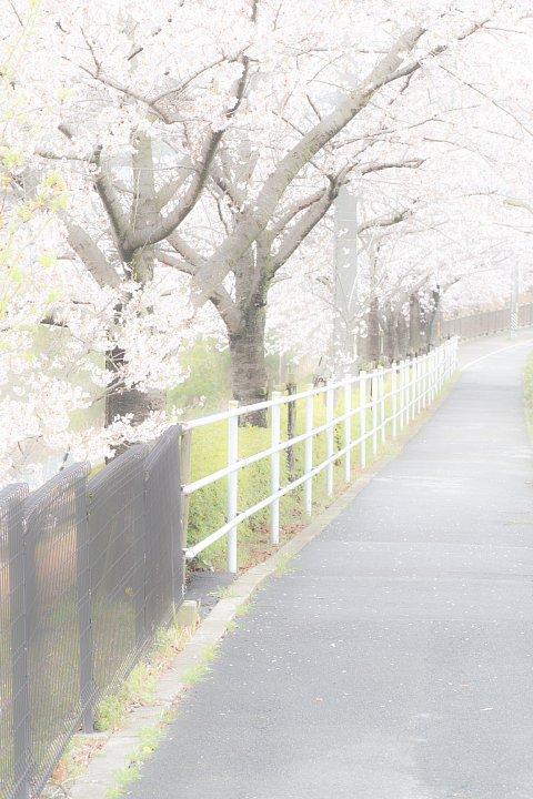 しっとりとした春爛漫_d0353489_15171646.jpg