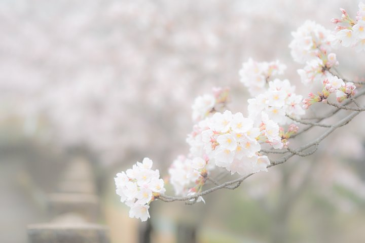 しっとりとした春爛漫_d0353489_1561697.jpg