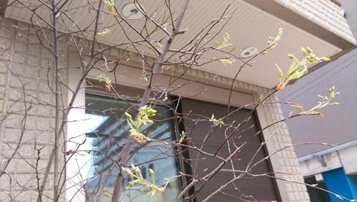 育みの雨_c0185092_16250548.jpg