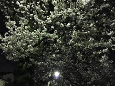 4月のロゼブランシェ_c0195496_15164510.jpg