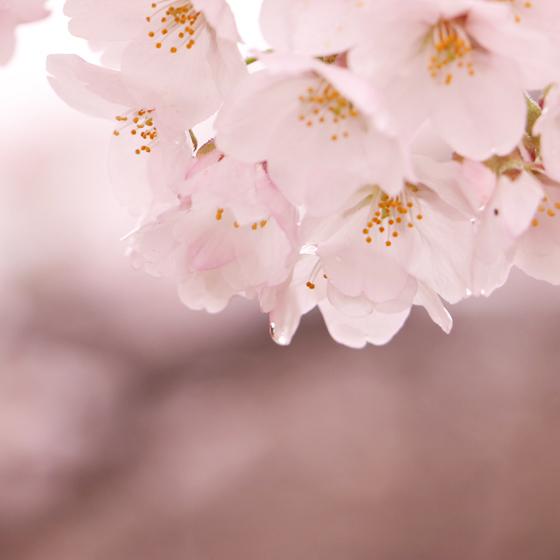 福井*カメラ女子の会 桜をふんわりピンク色に撮る!_a0189805_12450564.jpg