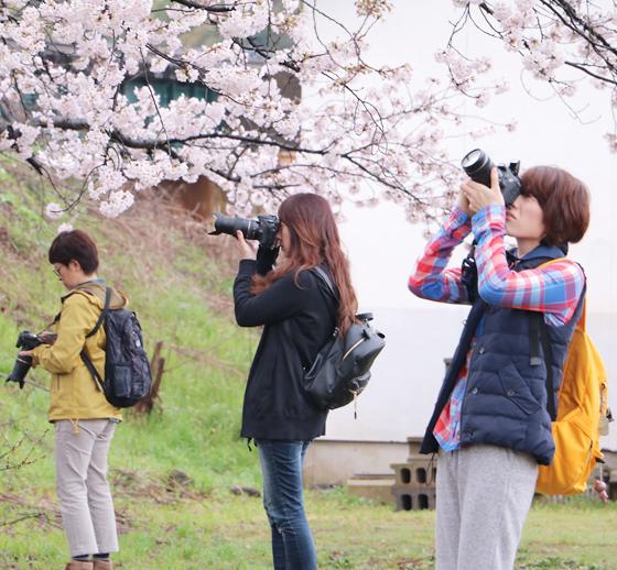 福井*カメラ女子の会 桜をふんわりピンク色に撮る!_a0189805_12450647.jpg
