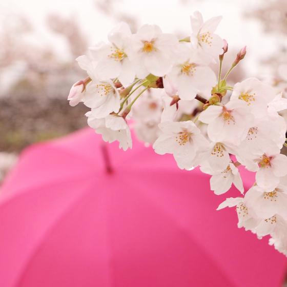 福井*カメラ女子の会 桜をふんわりピンク色に撮る!_a0189805_12450672.jpg