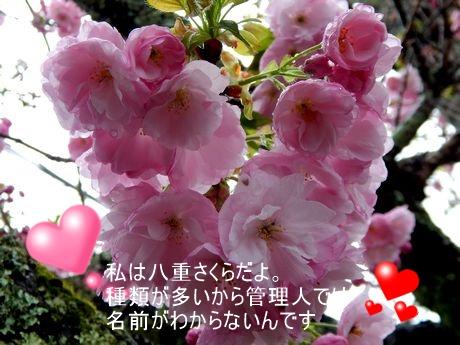 b0352112_1651035.jpg