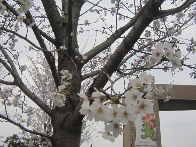 ♪春と共に★レオンジャックⅡ(千秋楽)_d0162225_21410804.jpg