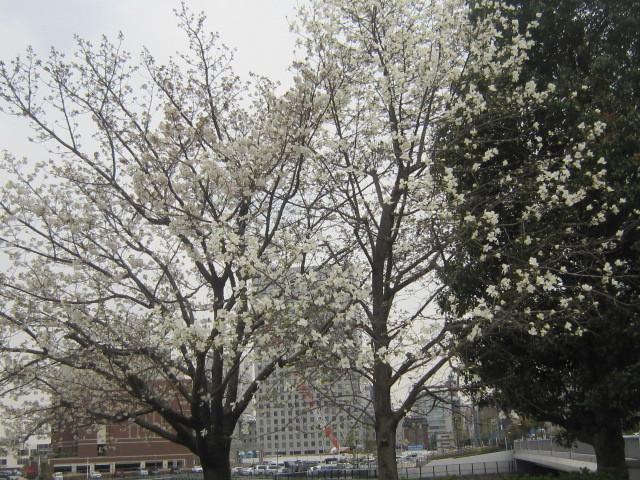 ♪春と共に★レオンジャックⅡ(千秋楽)_d0162225_21414831.jpg