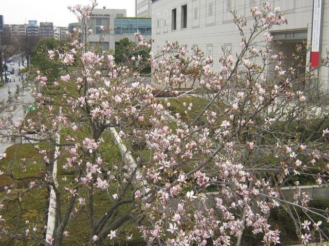 ♪春と共に★レオンジャックⅡ(千秋楽)_d0162225_21452124.jpg