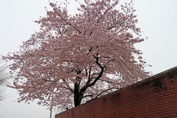 4月8日(土)例会_b0337729_07492713.jpg