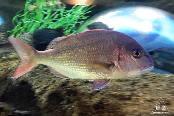 554 宍道湖自然館ゴビウス ~いつ行っても楽しい地元の水族館~_c0211532_20225771.jpg