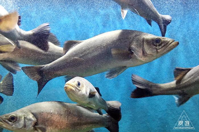 554 宍道湖自然館ゴビウス ~いつ行っても楽しい地元の水族館~_c0211532_20242018.jpg