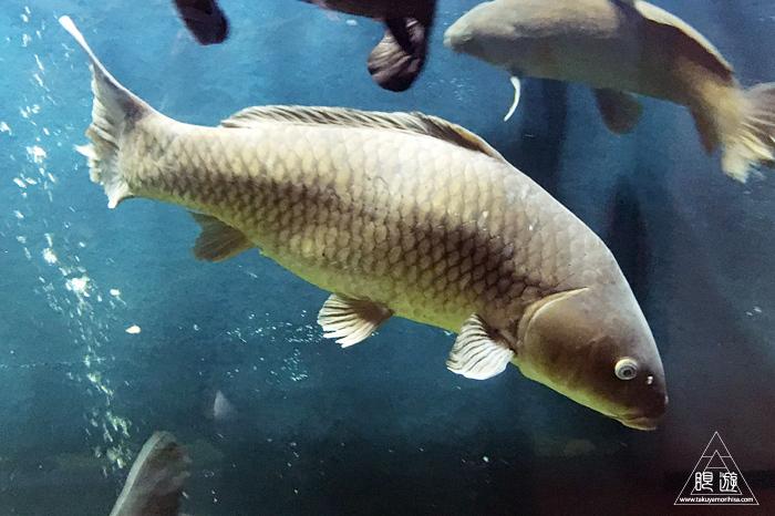 554 宍道湖自然館ゴビウス ~いつ行っても楽しい地元の水族館~_c0211532_20242120.jpg