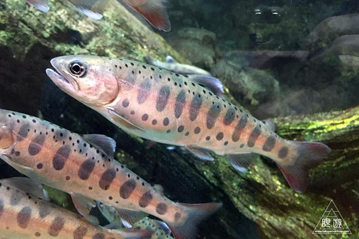 554 宍道湖自然館ゴビウス ~いつ行っても楽しい地元の水族館~_c0211532_20242144.jpg