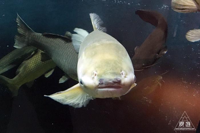 554 宍道湖自然館ゴビウス ~いつ行っても楽しい地元の水族館~_c0211532_20242177.jpg