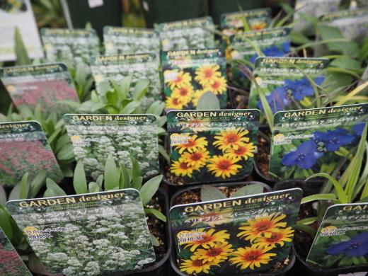 春、宿根草を植えましょう!_f0139333_01183174.jpg