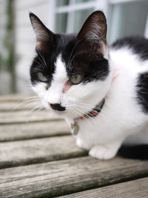 猫のお留守番 ハナちゃん編。_a0143140_2014189.jpg