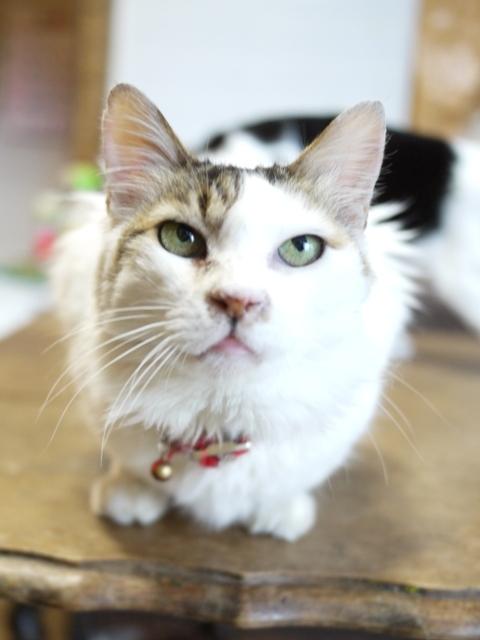 猫のお留守番 ホビちゃん編。_a0143140_20171732.jpg
