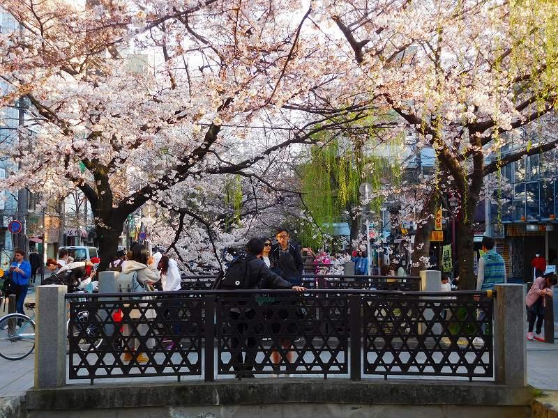 京都高瀬川(木屋町通)の桜並木20170404_e0237645_20571384.jpg