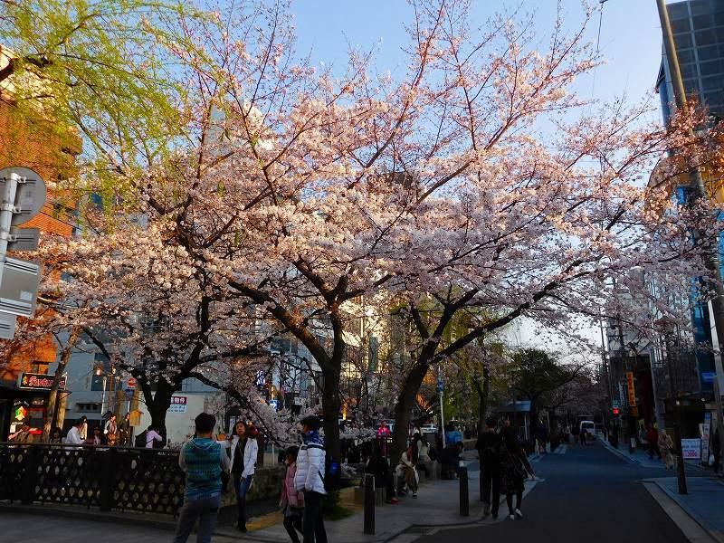 京都高瀬川(木屋町通)の桜並木20170404_e0237645_20572798.jpg