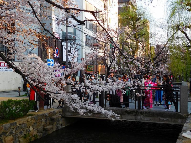 京都高瀬川(木屋町通)の桜並木20170404_e0237645_20575172.jpg