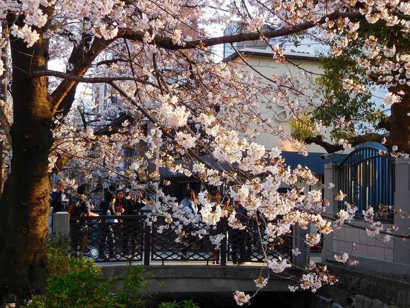 京都高瀬川(木屋町通)の桜並木20170404_e0237645_20592039.jpg