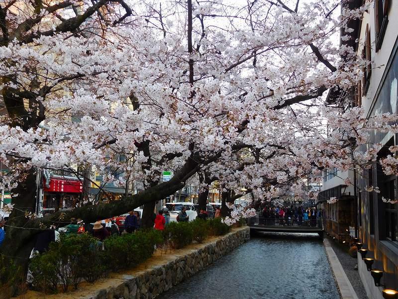 京都高瀬川(木屋町通)の桜並木20170404_e0237645_20594536.jpg