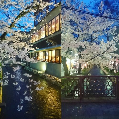 桜を見に京都へ♪_f0236260_02101783.jpg