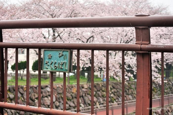 桜2017-雨-_f0234062_20432187.jpg