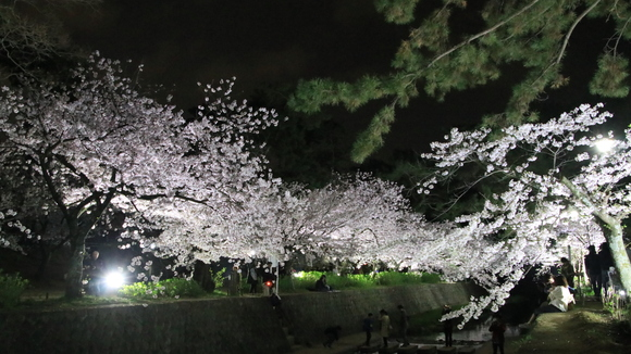 夙川 夜桜・・_d0202264_21364441.jpg