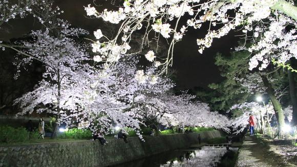 夙川 夜桜・・_d0202264_214332.jpg