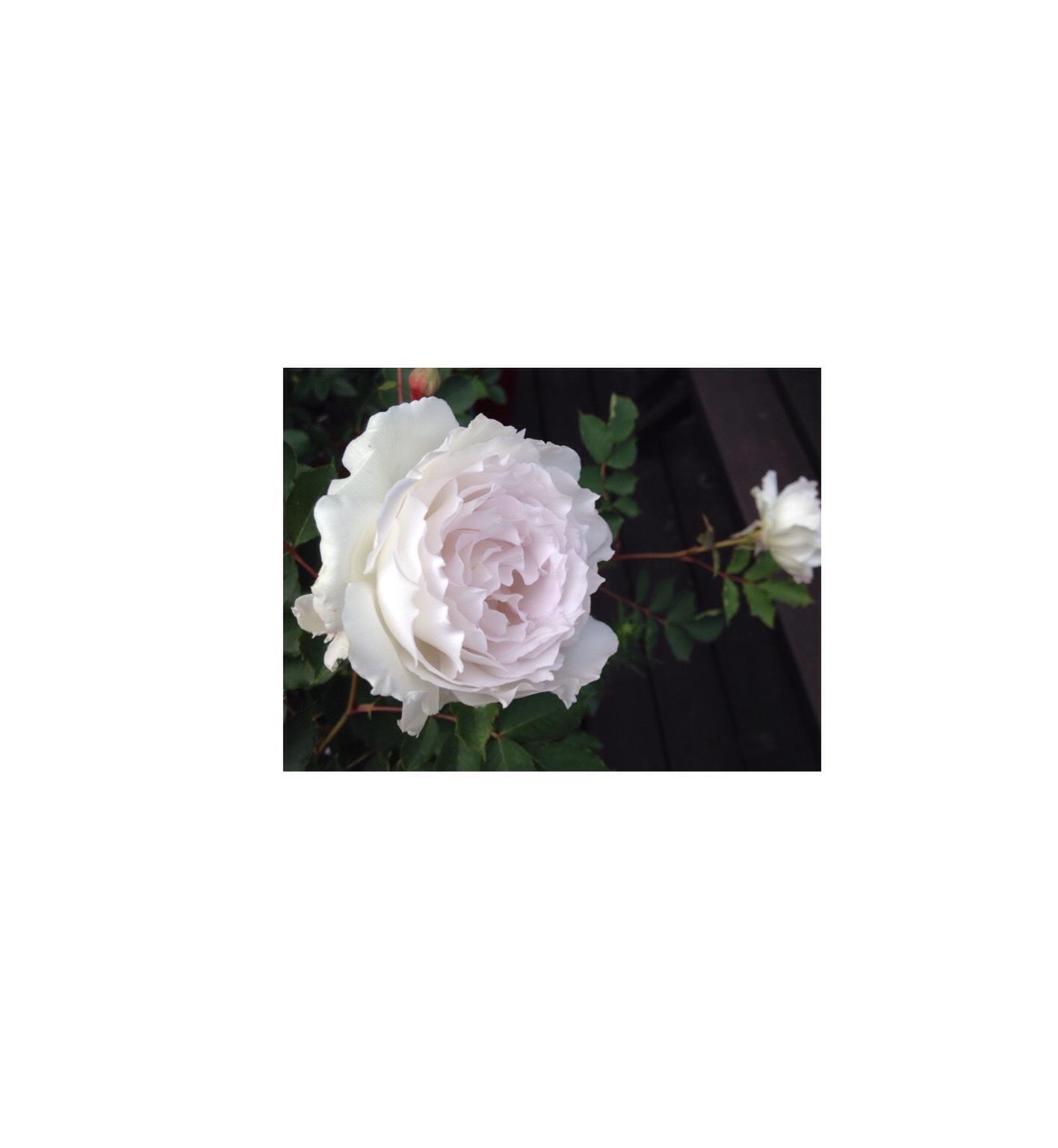 f0279566_18482679.jpg