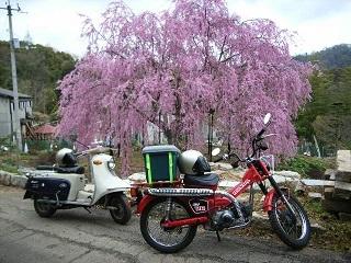 茶話会と桃色枝垂れ桜を楽しむ_a0064474_16135602.jpg