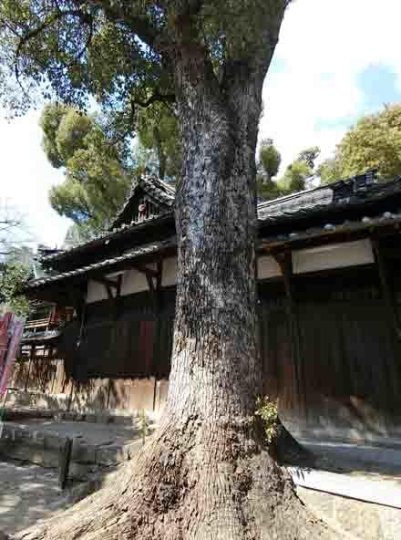 高瀬神社 土居_a0045381_13233015.jpg