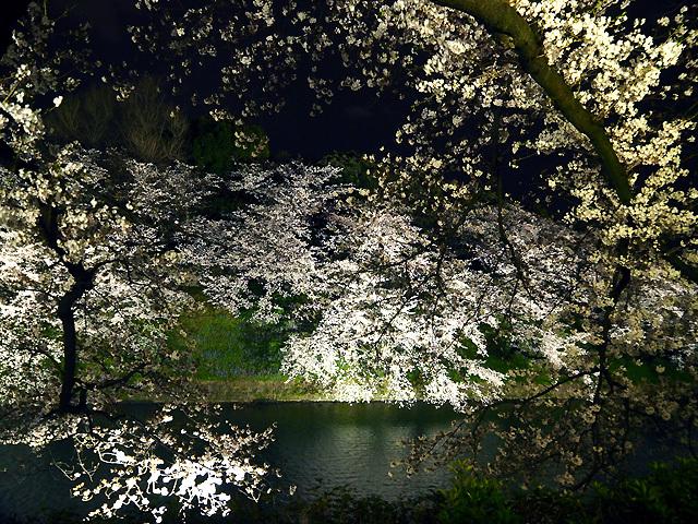 夜桜散歩_d0358793_08592409.jpg